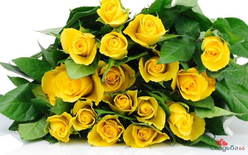 Желтые, Розы, букет, листья, бутоны, белый фон HD обои на рабочий стол