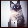 Pollycat